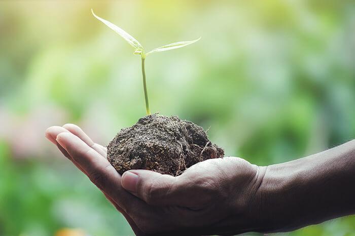aarde-met-plant-in-hand